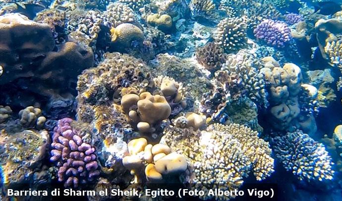 I colori della barriere corallina